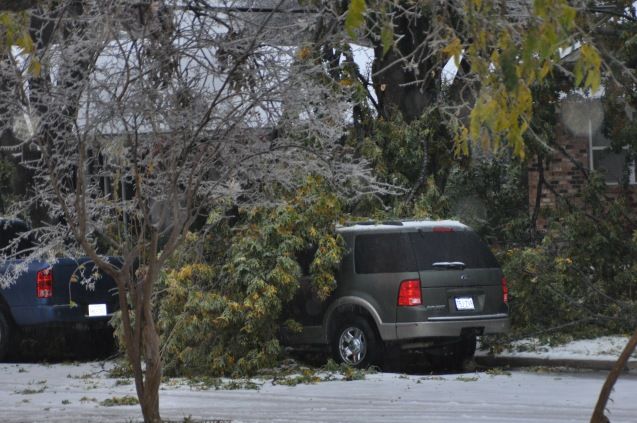 Car crushed by fallen tree Lake Highlands Dallas