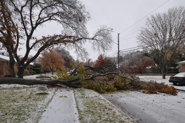 Tree blocking street in Lake Highlands Dec 2013 ice storm