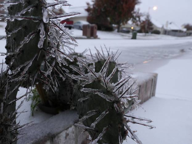 Ice covered cactus