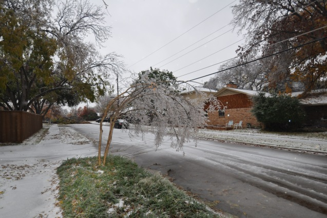 Ice storm damage Lake Highlands Dec 2013