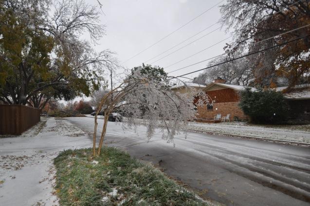 Ice storm damage Lake Highlands Dec 2013
